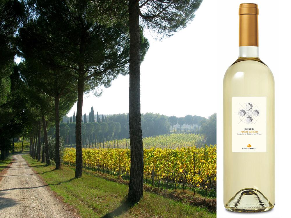 Pinot Grigio Image